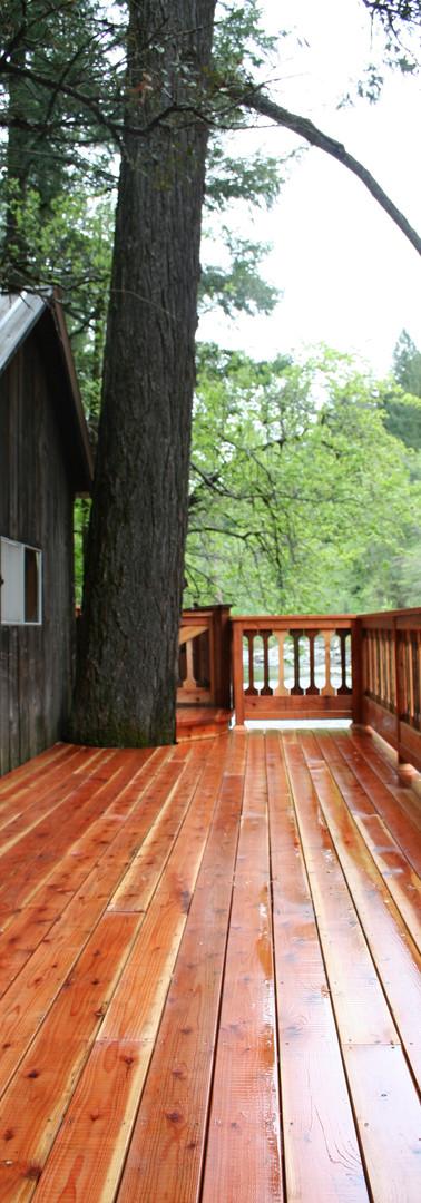 Redwood Beauty