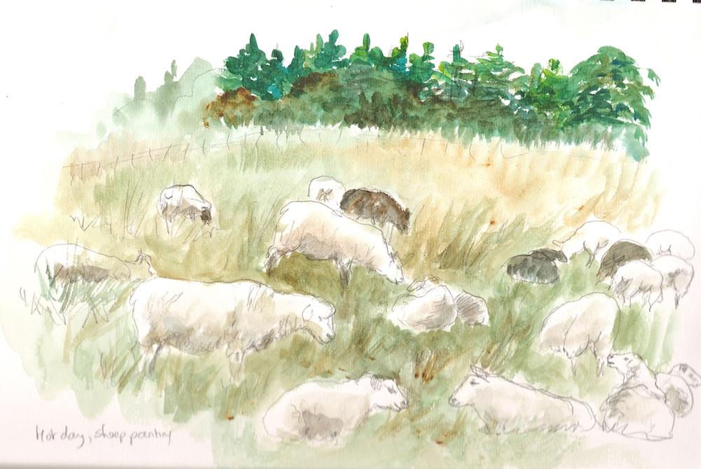 Watson sheep