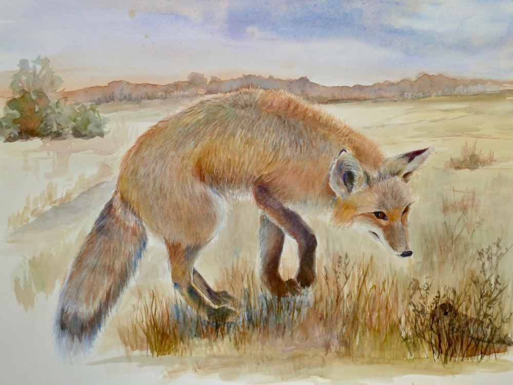 Red Fox and woodcock 1000pxjpg