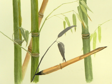 Homage to bamboo