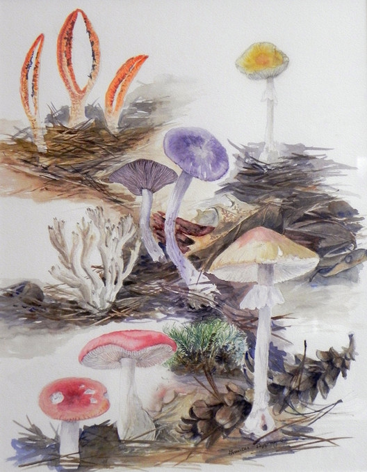 New England Fungi