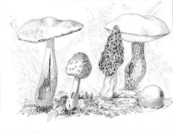 Fungi in ink