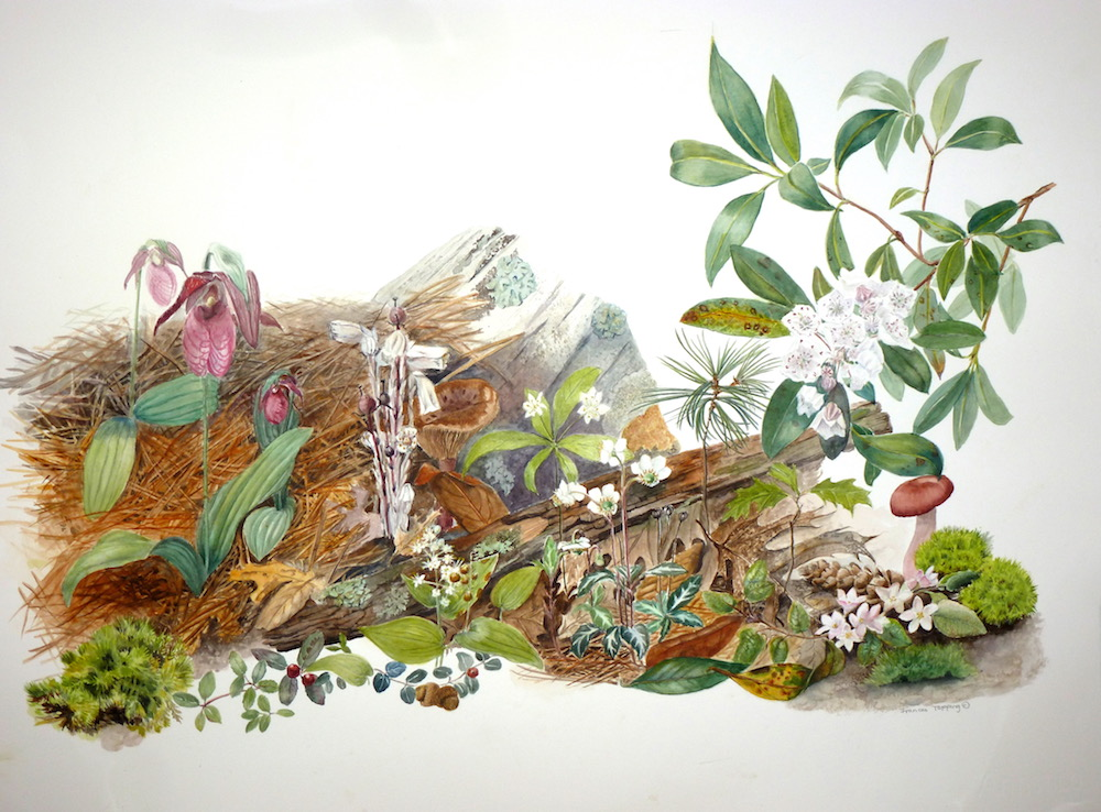Oak pine forest flora