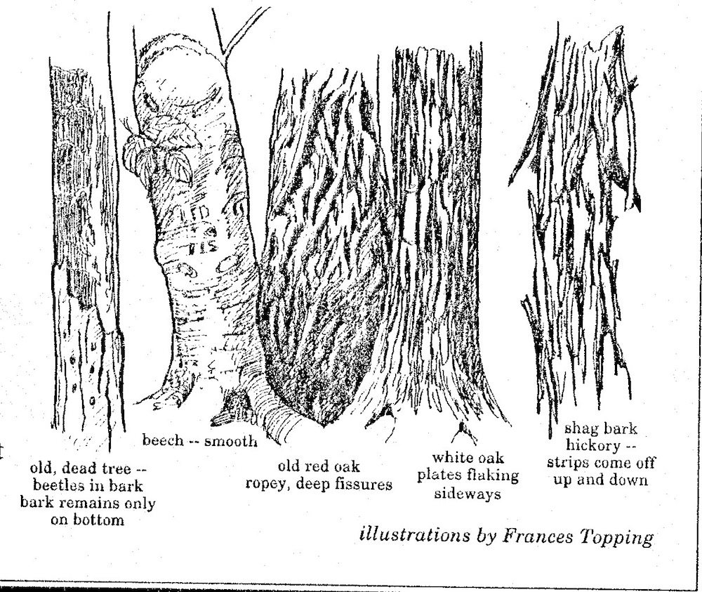 bark examples