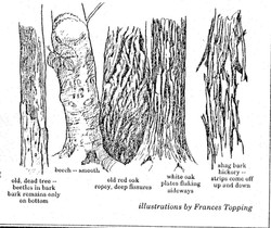 bark examples