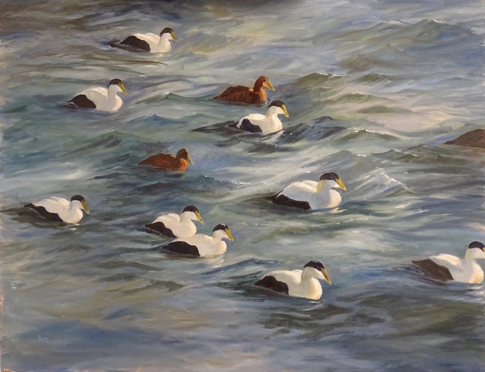Raft of Eiders