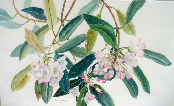 Rhododendron spring