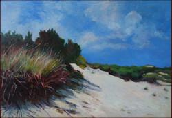 NJ Dune 161/2x24
