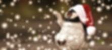 penguin-1871515_640%2520(1)_edited_edite