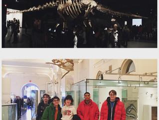 American Museum of Natural History: Titanosaur!