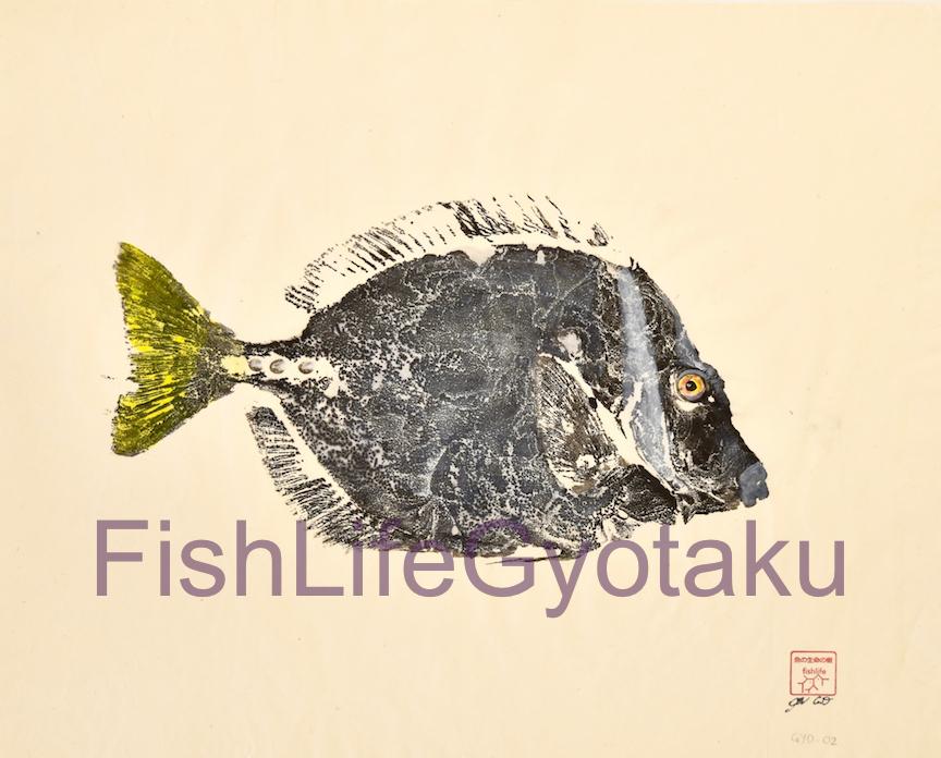 Razor Surgeonfish (Prionurus laticlavius)