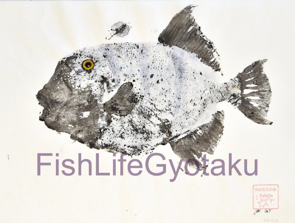 Stone Triggerfish (Pseudobalistes naufragium)