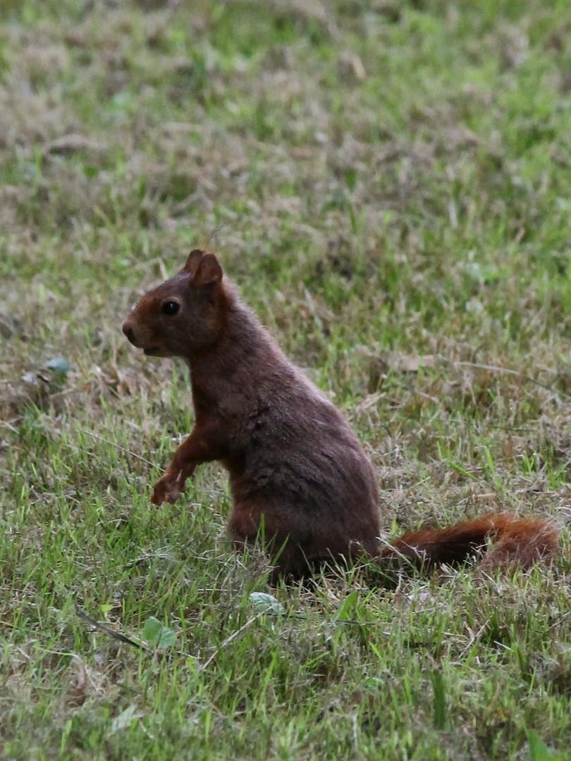 ecureuil camping la Grande Sologne