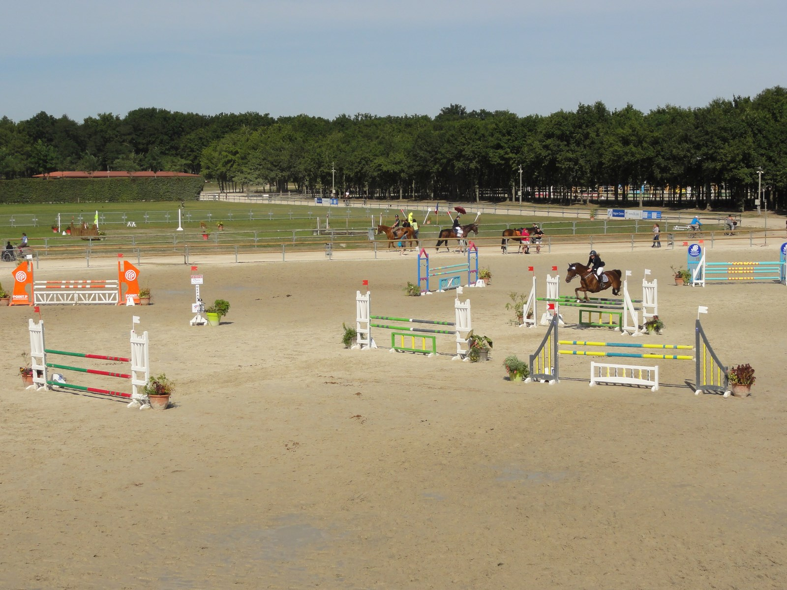 EQUESTRIAN CHAMPIONSHIPS 2020 CANCELLED
