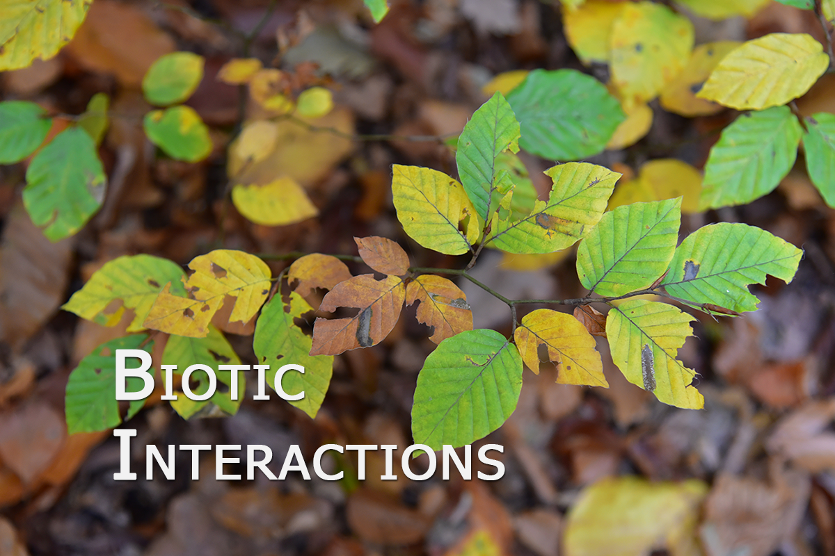 Biotic_interactions_02