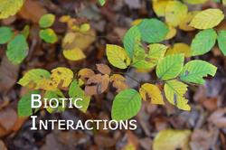 Biotic_interactions_02