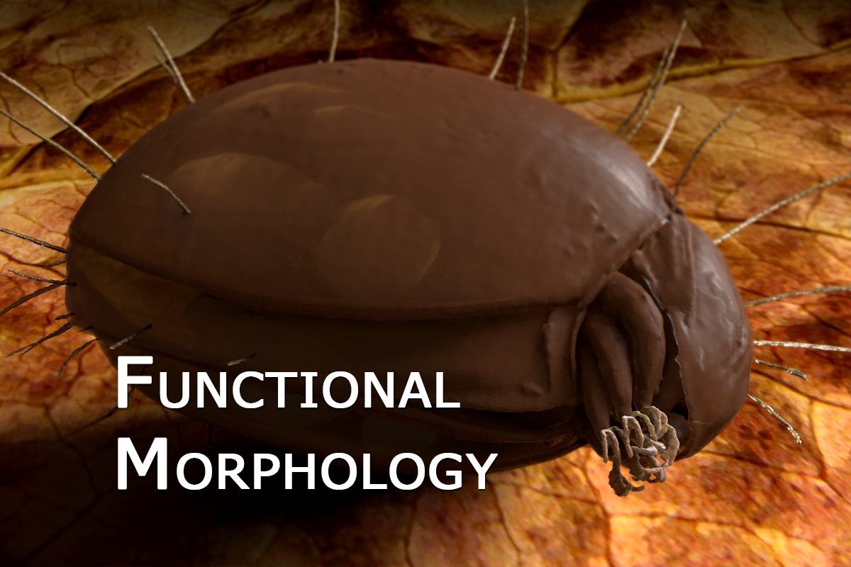 Functional_Morphology_02