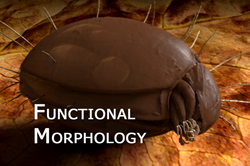 Functional_Morphology_02