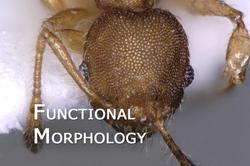Functional_Morphology_01