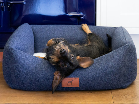 Why Do Dogs Pull Their Beds Around?