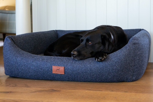 Cobalt Blue Bed with Grey Topper