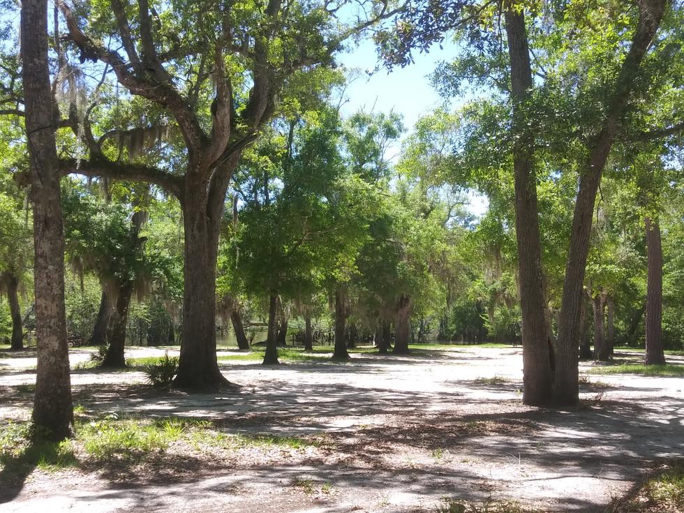 Barrington park camping area