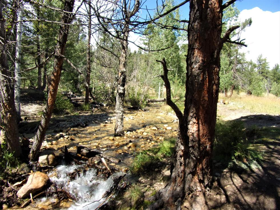 Browns Creek Colorado