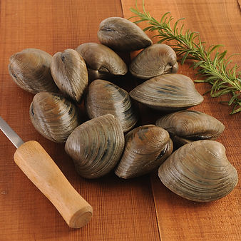 clams.jpeg