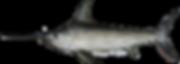 north_atlantic_swordfish.png