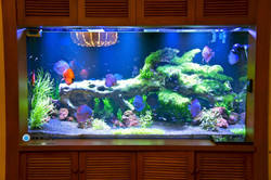 planted-freshwater-aquarium-lighting-discus