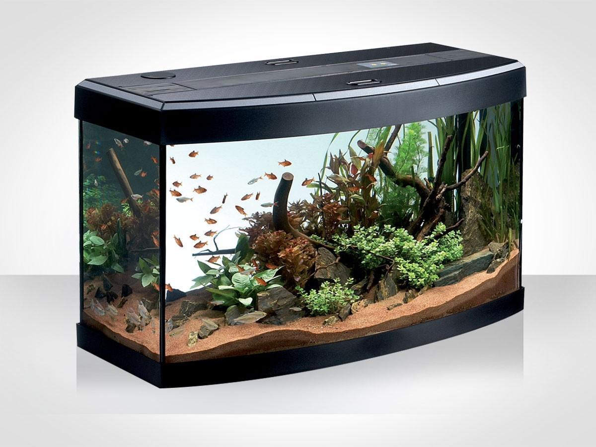 acquario-tenerif-sinuo-150