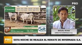 REMATE DE INVERNADA 21-10.jpg