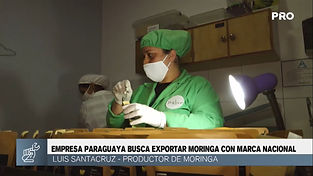 EXPORTACION DE MORINGA.jpg