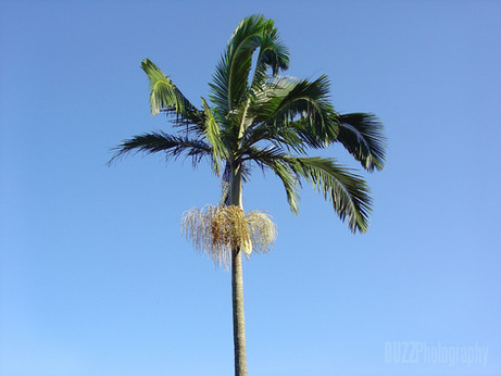 BuzzPhotography - Natureza