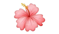pink_hibiscus-removebg-preview.png