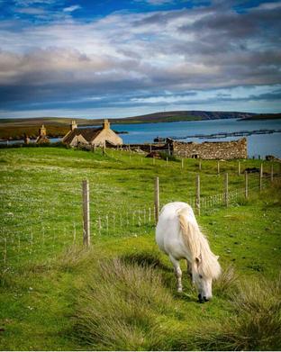 Gretchen Busl, Shetland #2