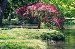Studio-de-l'Orangerie-exterieur-les-canards