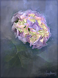 Hydrangea w Cobalt texture from The Inspire Collection.jpg