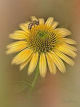 Bee-ing Pretty.jpg