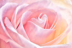 Painted Pastel Rose.jpg