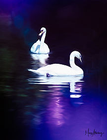Two Swans.jpg