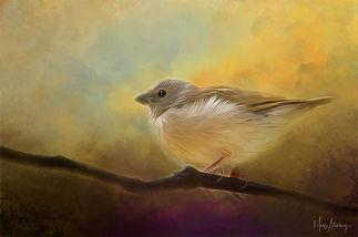 Fine Feathered Friend.jpg