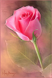 The Beauty of a Simple Rose.jpg