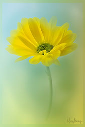Daisy Love 2.jpg