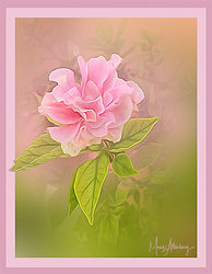 Frilly in Pink.jpg