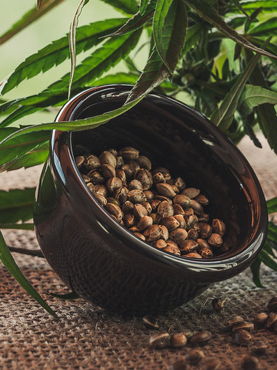 Elevating Your Health With Hemp