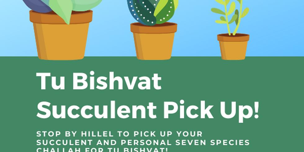Tu Bishvat Succulent Pick Up!