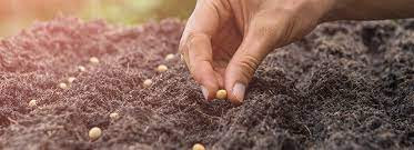Sowing Seeds Of New Life