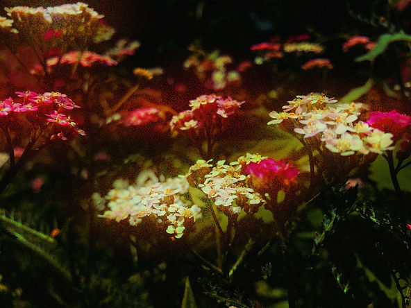 flowersglow.jpg