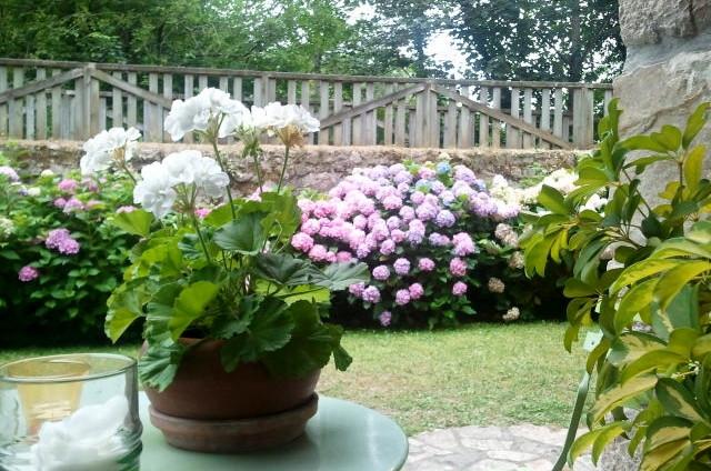 Terraza con hortensias.